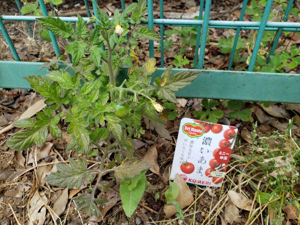 デルモンテのトマト